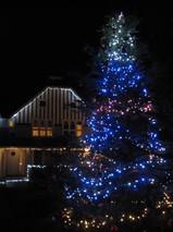 201212115 Xmas tree.JPG