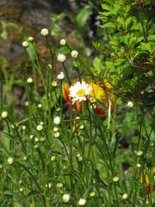20130519margaret bloom.JPG
